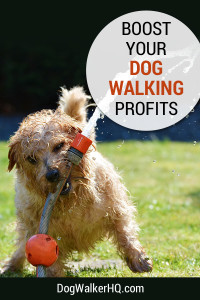 Boost Profits from Your Dog Walking Service