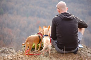 Ideas to Promote your Dog Walking Business 2